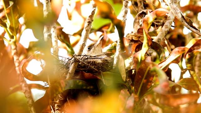 Vogel-Ausflug