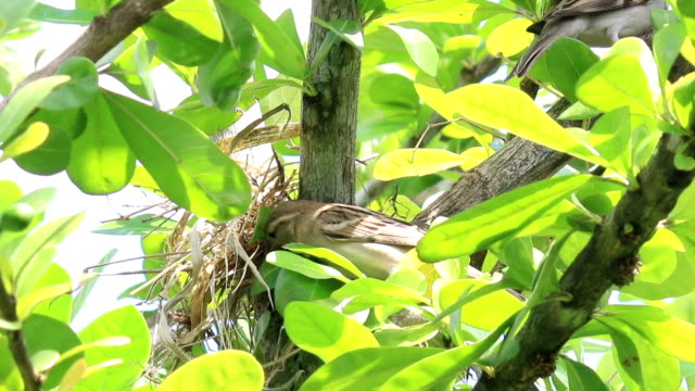 bird build nest on tree - bird's nest stock videos & royalty-free footage