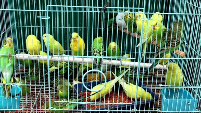 bird cage asian market yogyakarta java indonesia - asian market stock videos and b-roll footage
