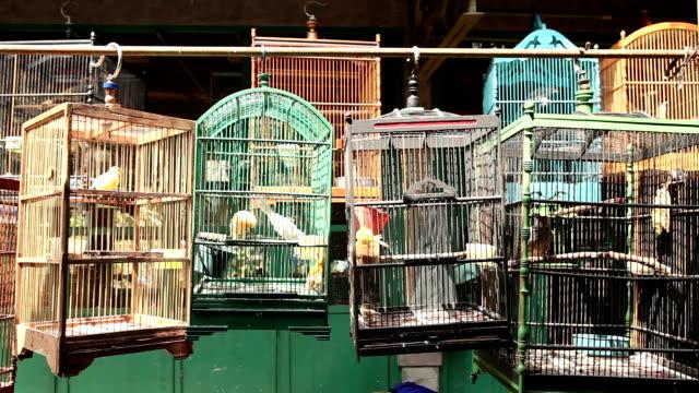uccello gabbia mercato orientale yogyakarta java indonesia - gabbia per gli uccelli video stock e b–roll