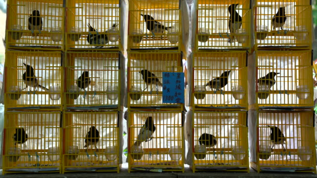 vidéos et rushes de bird cage - captive animals