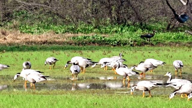 bird century - water bird stock videos & royalty-free footage