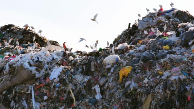 ごみの上を回る鳥、アジアの埋め立て地からの巨大なゴミ捨て場。汚染、地球温暖化、地域の清掃、清掃、生態学の概念。コロナウイルスまたはcovid-19の危機的流行 - ゴミ捨て場点の映像素材/bロール