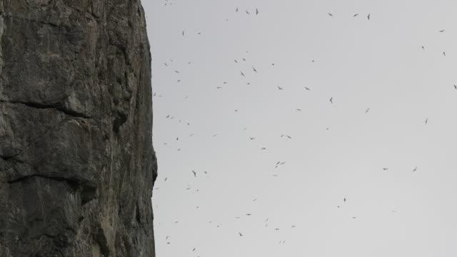 bird cliff in svalbard - スヴァールバル諸島点の映像素材/bロール