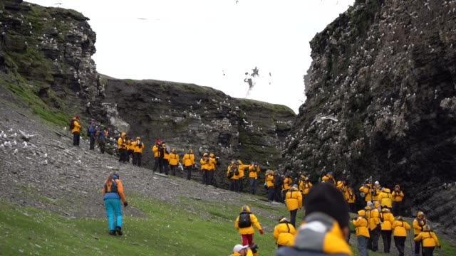 bird colony svalbard islands - spitsbergen - umweltkatastrophe stock-videos und b-roll-filmmaterial