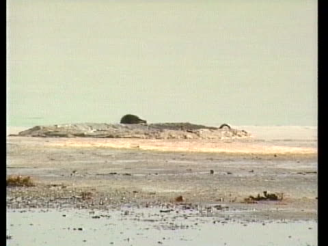 bird covered in oil sludge struggles to move on a debris-covered beach. - slimy stock videos & royalty-free footage