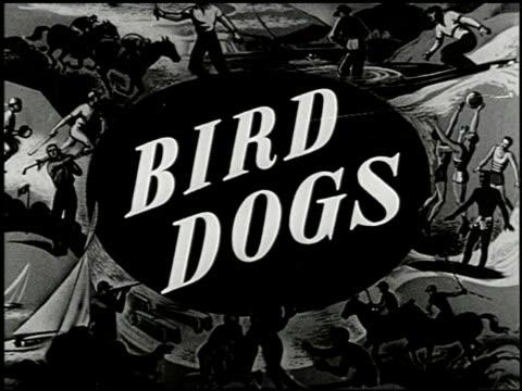 vídeos y material grabado en eventos de stock de bird dogs - 1 of 10 - perro cazador