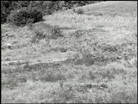 vídeos y material grabado en eventos de stock de bird dogs - 10 of 10 - perro cazador