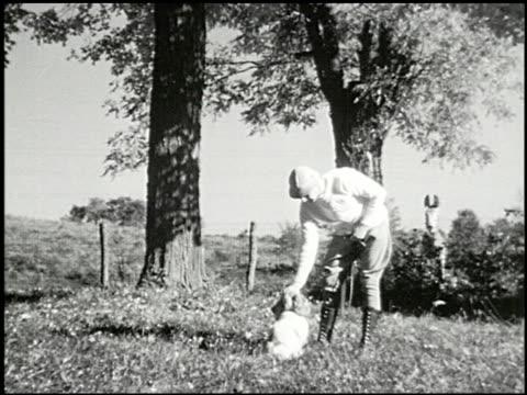 vídeos y material grabado en eventos de stock de bird dogs - 4 of 10 - perro cazador