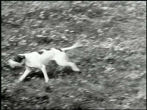 vídeos y material grabado en eventos de stock de bird dogs - 6 of 10 - perro cazador