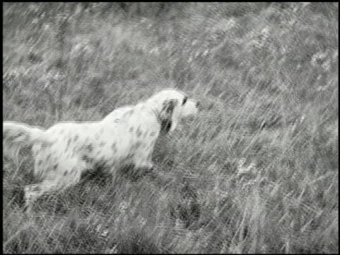 vídeos y material grabado en eventos de stock de bird dogs - 7 of 10 - perro cazador