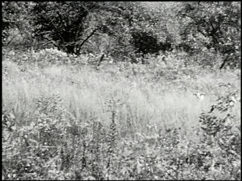 vídeos y material grabado en eventos de stock de bird dogs - 8 of 10 - perro cazador