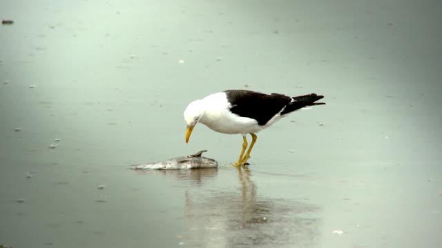 Vogel Essen Fisch