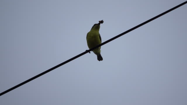 Bird eating food on the wire