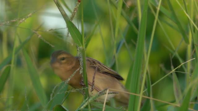 bird eating grass seed - limb body part stock videos & royalty-free footage