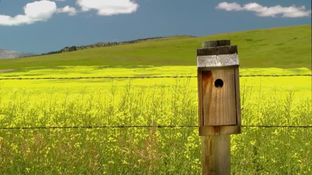 Bird Entering Birdhouse