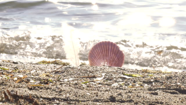 bird feather and seashell by the sea - seashell stock videos & royalty-free footage
