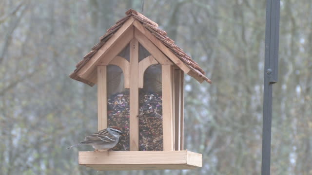 bird feeder 1 - hd 30f - birdhouse stock videos & royalty-free footage