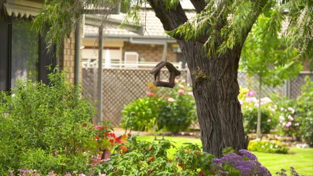 vidéos et rushes de une mangeoire d'oiseau accrochant à un arbre dans une arrière-cour - parc public