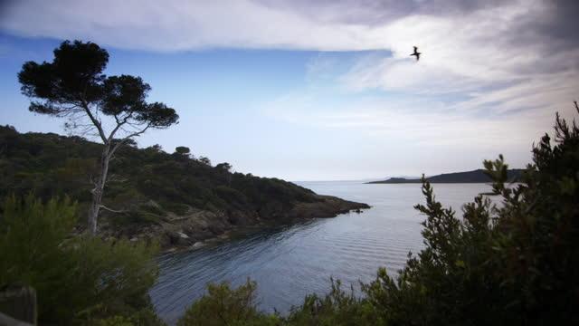 vídeos de stock, filmes e b-roll de bird flies across bay on french riviera - baía