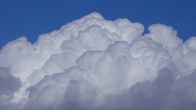 bird flies in front of cumulus clouds - cumulus cloud stock videos & royalty-free footage