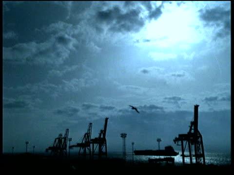 bird flies over dockyard at dawn - ショーハム・バイ・シー点の映像素材/bロール