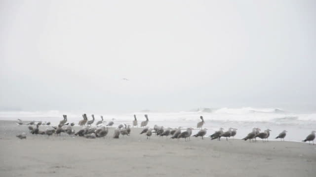 Bird Flock abheben am Meer