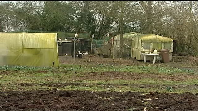 h5n1 bird flu outbreak at suffolk turkey farm government says outbreak is under control / cull nears completion suffolk holton poultry stood in pen... - chicken wire stock videos and b-roll footage