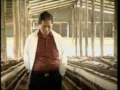 mass cull of chickens; itn boonchu tengon interviewed sot translated chicken farmer towards thru empty farm buildings feather on wire of chicken pen... - virus dell'influenza aviaria video stock e b–roll