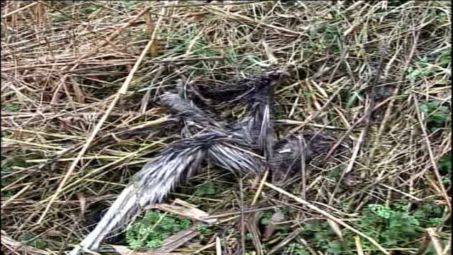 bird flu outbreak - official report; decaying turkey carcasses on ground sign on farm warning of bird flu ground around farm littered with rubbish... - littering stock videos & royalty-free footage