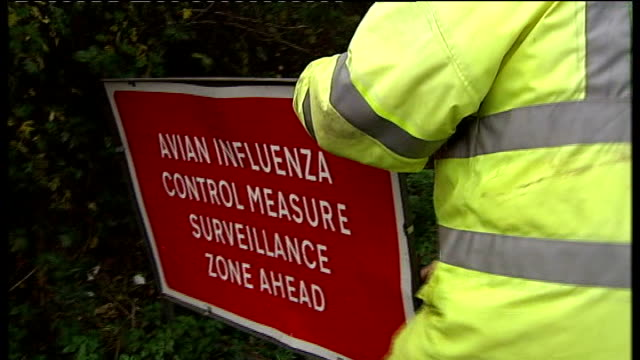 bird flu outbreak on suffolk farm confimed as deadly h5n1 strain; suffolk: ext back view official putting warning sign on road in control zone free... - virus dell'influenza aviaria video stock e b–roll
