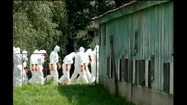 bird flu outbreak on suffolk farm confimed as deadly h5n1 strain; 22.6.07 czech republic: tisova turkey farm: health officials, in white overalls,... - virus dell'influenza aviaria video stock e b–roll