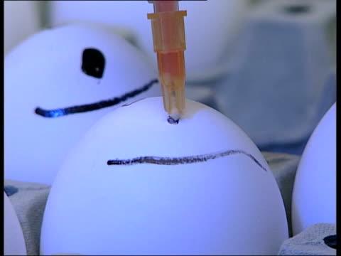 stockvideo's en b-roll-footage met swan in scotland tests positive for h5n1virus; r20020620 / 20.2.2006 england: surrey: weybridge: veterinary laboratories agency : int scientist... - adn