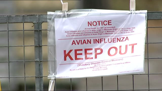 yorkshire duck farm cull; england: yorkshire: east riding: driffield: nafferton: ext people along in farmyard / 'avian influenza keep out' sign on... - virus dell'influenza aviaria video stock e b–roll