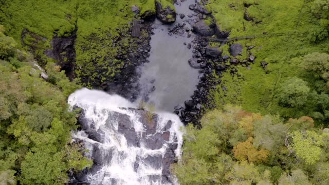 bird flying by the caracol falls in canela, rs, brazil - caracol stock videos and b-roll footage