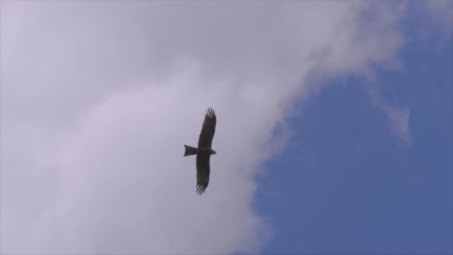 bird flying in blue sky environment with some clouds - claw stock videos & royalty-free footage