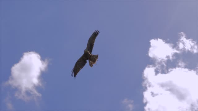 bird flying in blue sky environment with some clouds - 鳥点の映像素材/bロール