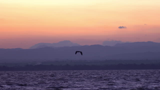 vídeos de stock e filmes b-roll de bird flying in slow motion at sunset over the sea - pelicano