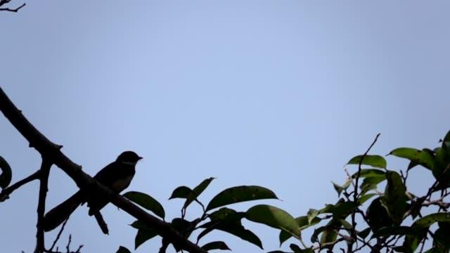 hd bird flying in slow - flock of birds stock videos & royalty-free footage