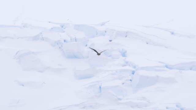 bird flying next to a glacier wall - ice floe stock videos & royalty-free footage