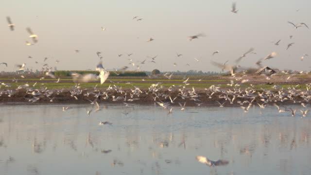 vídeos y material grabado en eventos de stock de aves volando sobre el pantano - pantano zona húmeda
