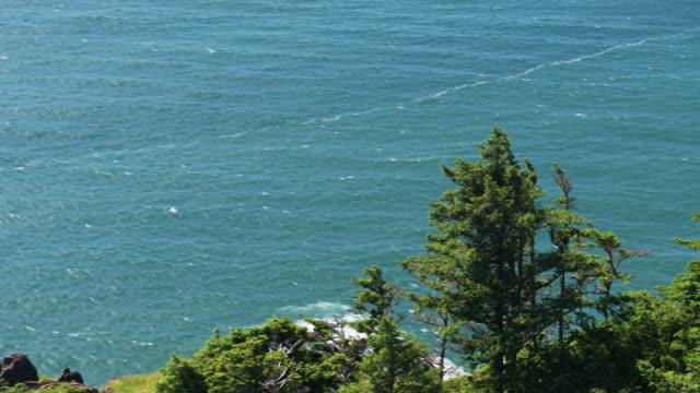 オレゴンコーストの崖の上を飛ぶ鳥 - ドローンショット - オレゴン沿岸点の映像素材/bロール