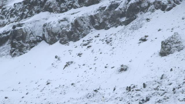 ms ts bird flying over snow / antarctica peninsular, antarctica - utfällda vingar bildbanksvideor och videomaterial från bakom kulisserna