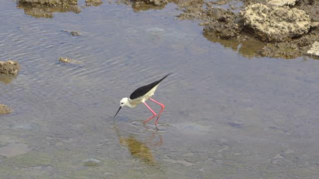 Vogel-Lebensraum