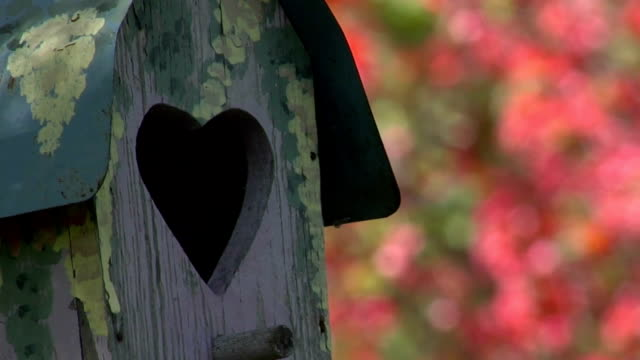 bird house hanging from tree - birdhouse stock videos & royalty-free footage