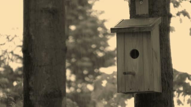 HD: bird house