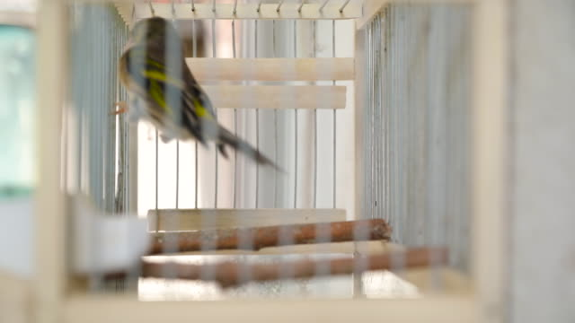 bird in a cage - cage stock videos & royalty-free footage