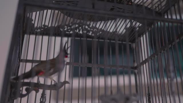 bird in a cage - gabbia per gli uccelli video stock e b–roll