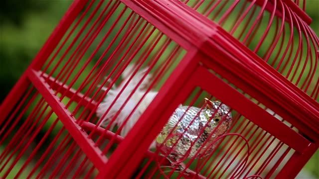uccello in gabbia, realistico decorazione - gabbia per gli uccelli video stock e b–roll