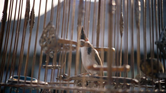 vídeos de stock e filmes b-roll de bird in cage - captive animals